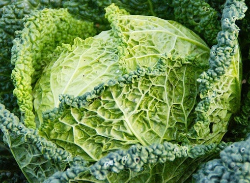 16 Powerful Detox Food Ideas Cabbage and Kale